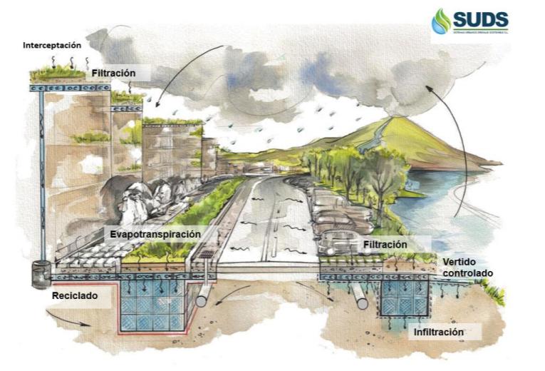 Actualmente las ciudades son grandes ecosistemas vivos, pero con una piel inerte e impermeable